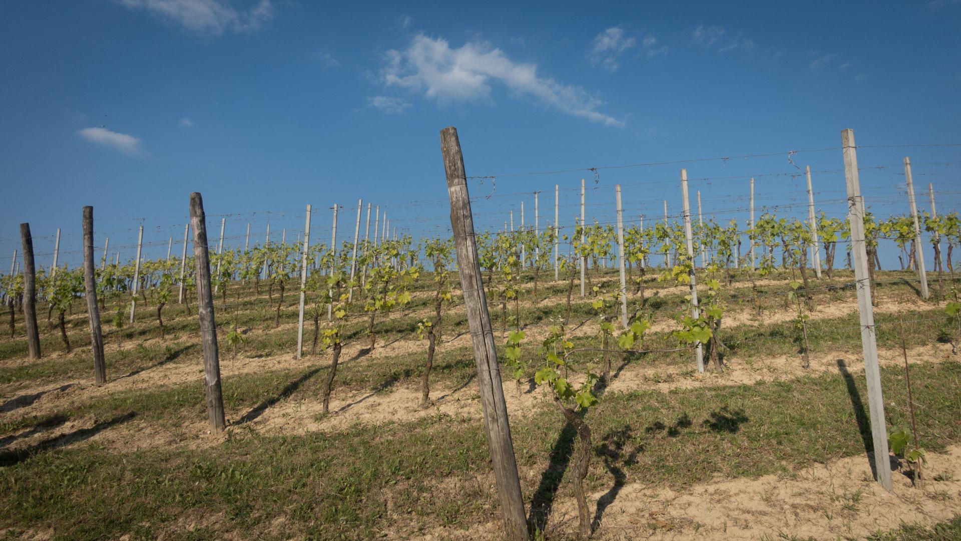 Piemont (17 of 24)