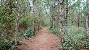 Wanderweg durch Tannenwälder