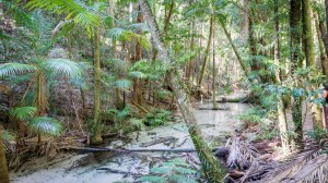 Fluss durch Fraser Island