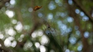 Eine wohl kleine Spinne