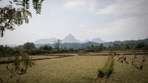 Trockene Reisfelder